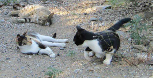 Louise Michel une grande amoureuse des chats ..
