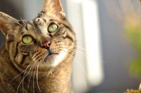 Romain Gary a été sauvé du suicide par un chat...