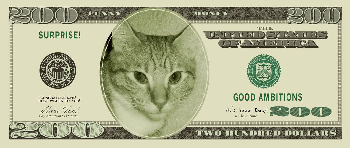 Les chats des Présidents des USA.