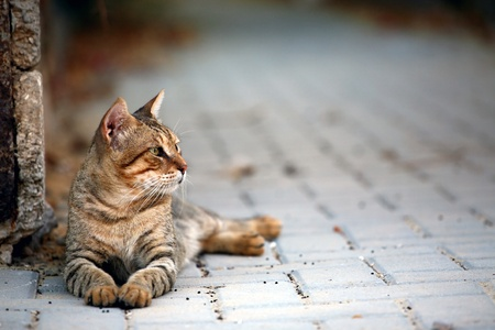 Alexandre et Mysouff... Chez les Dumas, père et fils ont le même prénom, leurs chats aussi !