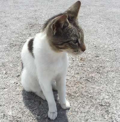 Un chat sauve son abbé de maître de l'enterrement vivant