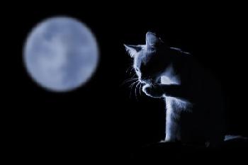 Le  chat né de la lune ...