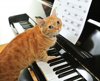 Le chat qui interrompt Mozart