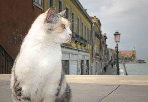 Le chat qui a sauvé Venise…