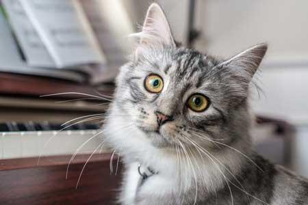 Le chat de la fugue…