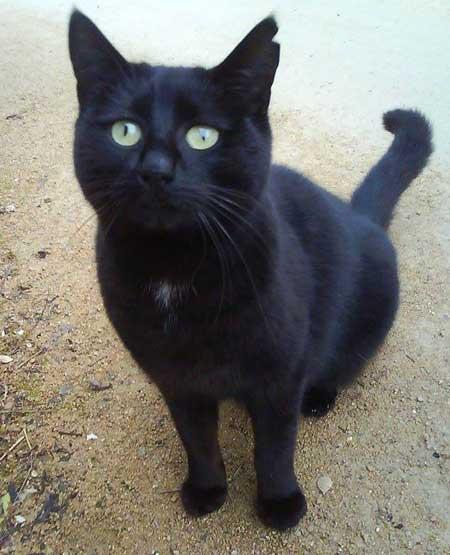 Photo du chat Bijou