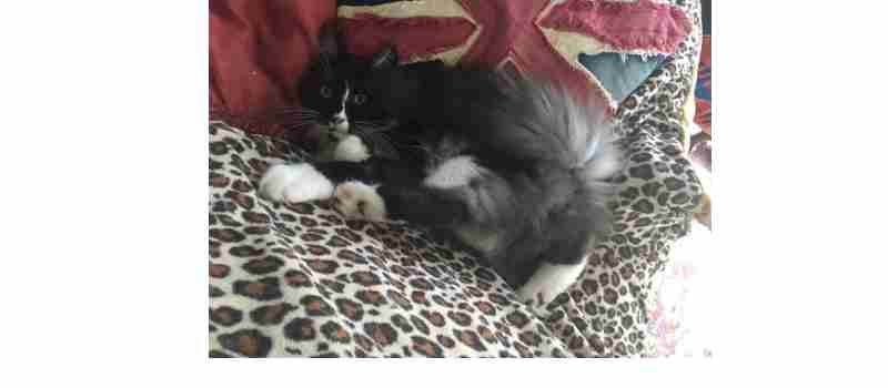 Le chat de Manou.