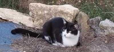 Appel à chat perdu a partager sur le Gers et la région Languedoc-Roussillon-Midi-Pyrénées.