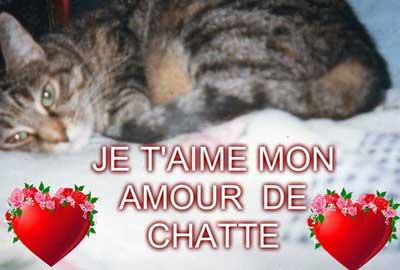 Notre petit coin de Paradis pour ne pas oublier un chat adoré disparu .....