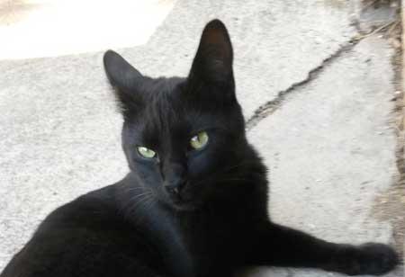 Je suis un chat noir et personne ne veut m'adopter.