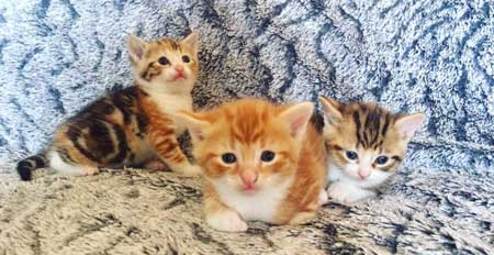 Mégane sollicite votre avis et votre expérience pour un de ses chatons