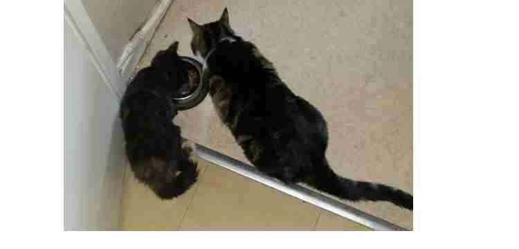 Les chats de Christiane.