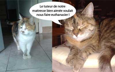 Continuez à partager la demande d'adoption de Bouboune et Mirabelle victimes d'un méchant tuteur.