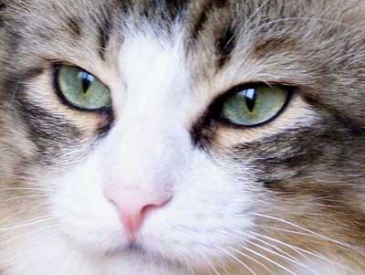 Pour garder un souvenir éternel d'un chat disparu.