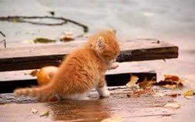 Poème pour un petit chaton errant.