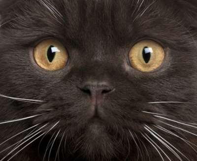 La prière du chat :
