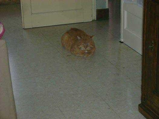 Hommage à un chat des rues par Célia Hoerter.