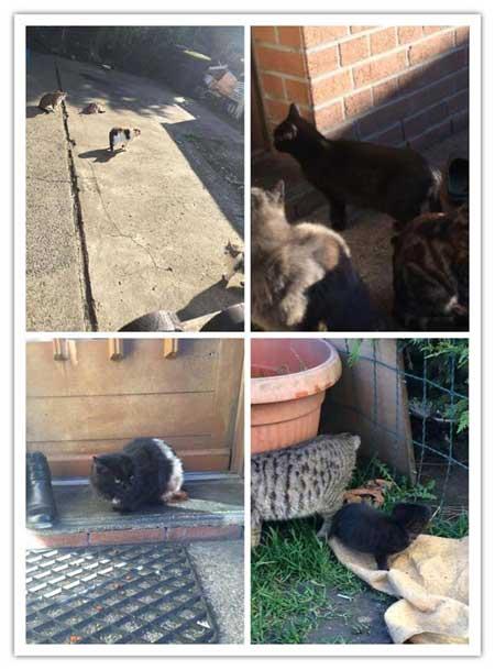 Tiffany appelle à l'aide pour sauver des dizaines de chats sur Hénin Beaumont.