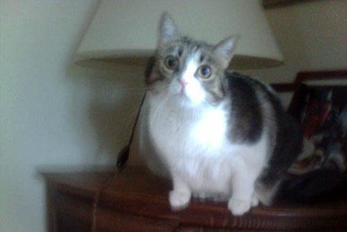 L'histoire de Zillia une chatte qui ne voulait pas quitter la Corse