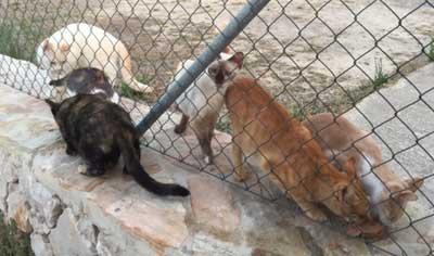 Agnès lance un appel en faveur des chats de Rocamadour qui risquent de mourir de faim.