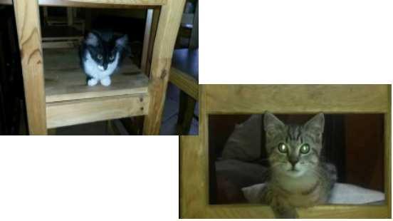 Vous êtes des Yvelines aidez Jessica à sauver ces chats !