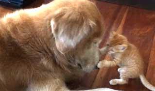 L'attendrissante vidéo du chat Koda et du chien Keelo.