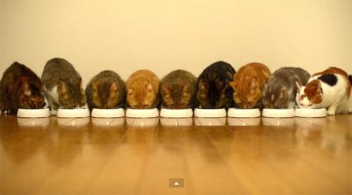 Banquet de chats