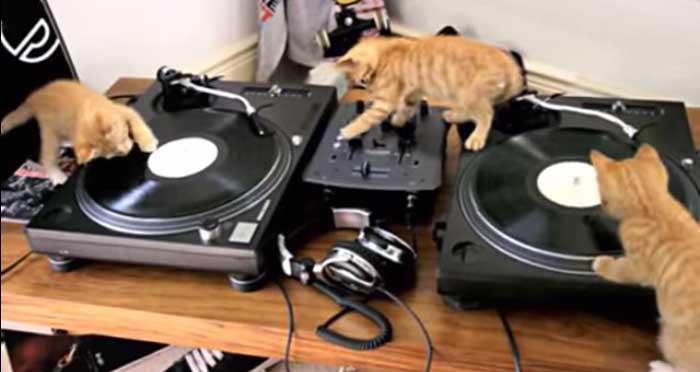 Vidéo : Les chatons aux platines !