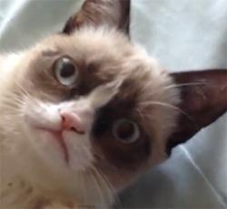 Cheer up, Grumpy Cat