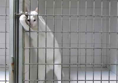 Marseille : Chamallow le roi de l'évasion est un chat !