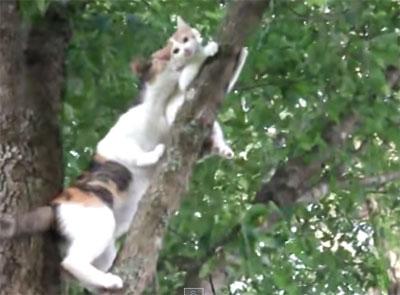 Vidéo d'une chatte secouriste et alpiniste pour son petit...