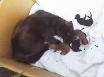 Vidéo du sauvetage du froid d'une chatte et de ses chatons une veille de Noel !
