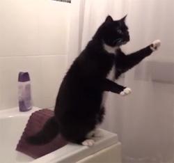 Video le chat qui pose devant un miroir