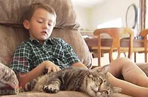 Un chat défend son jeune maitre agressé par un chien