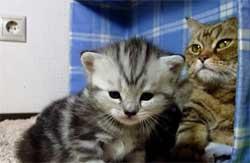 Vidéo craquante d'une chatte et son petit.