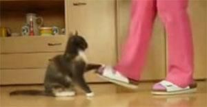Vidéo : Le chat d'agility, incroyable et bravo à tous les deux, maîtresse et chat.