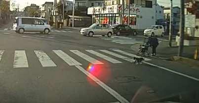 Un chat aide une grand-mère à traverser la rue