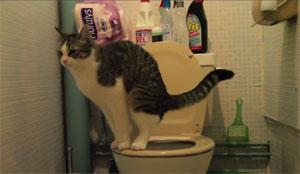 Vidéo : Le chat va à la chasse...d'eau !