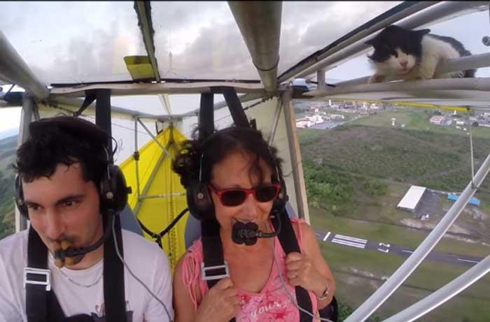 Vidéo : le chat aviateur...
