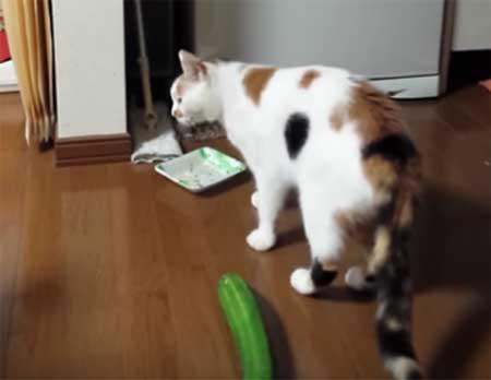 Vidéo du Concombre masqué