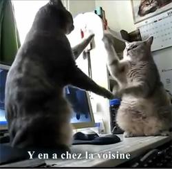 Ah si je pouvais apprendre à mes chats à danser !