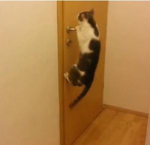 L on un chat tonnant qui a appris ouvrir toutes les portes for Radio pour ouvrir porte