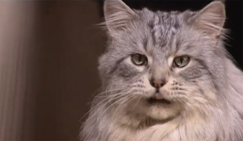 Une belle belle histoire de chats en vidéo par Philippe Muyl