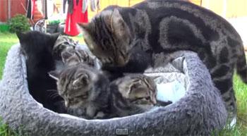 On ne peut qu'être emu par l'amour maternel de cette chatte