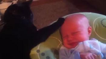 Vidéo du chat nounou